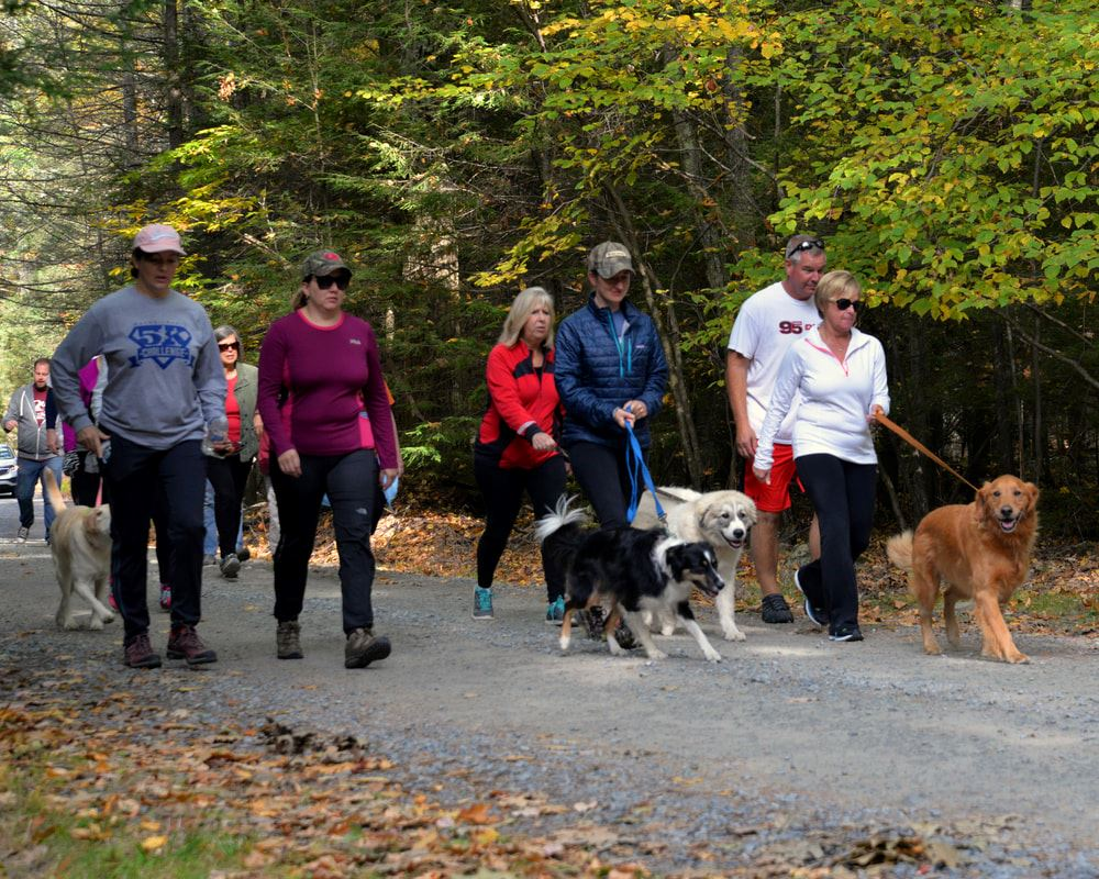 Men and women with their dogs walking on a trail.